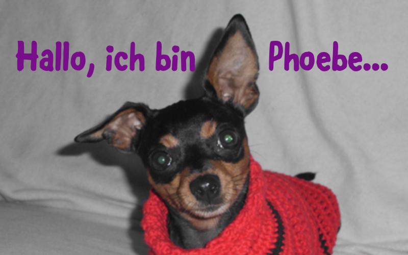 phoebie-hundepulli-knotenhexe-01