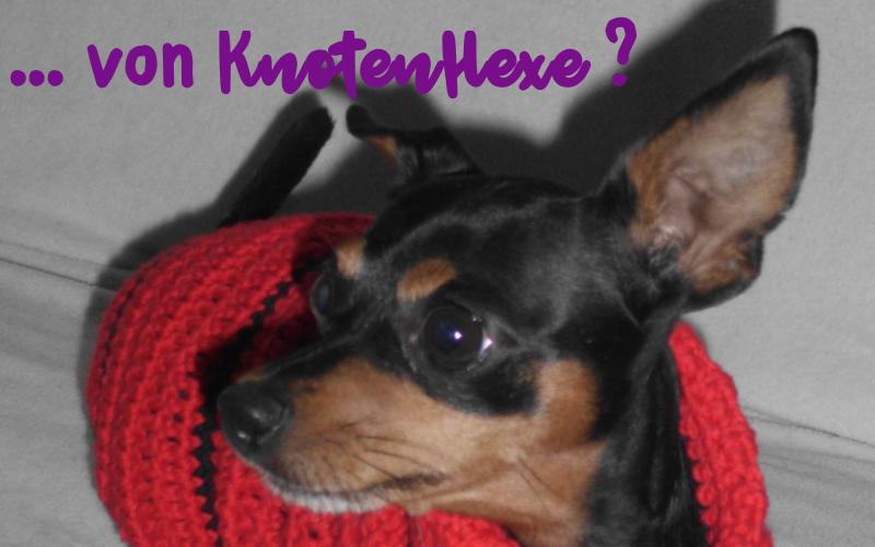 phoebie-hundepulli-knotenhexe-08
